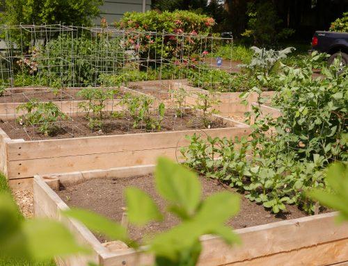 Front yard lawn to garden